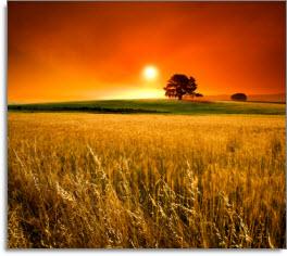 glorious_sunset